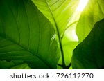 leaves texture green and yellow ... | Shutterstock . vector #726112270