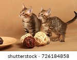 Stock photo two kittens in a strip of tabby near decorative wooden balls 726184858