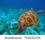 green sea turtle in clear sea... | Shutterstock . vector #726222154