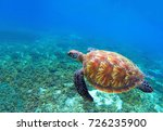 Small photo of Green sea turtle near seaweeds. Tropical nature of exotic island. Olive ridley turtle in blue sea water. Sea tortoise swims underwater. Undersea photo. Protected marine animal in natural environment