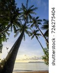 silhouette of palm tree in the ... | Shutterstock . vector #726275404