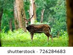 Spotted Deer In Wayanad Kerala...