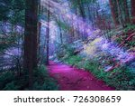 misty magical color forest   Shutterstock . vector #726308659