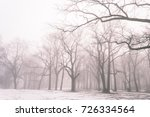 Cold Winter City Park In Mist...