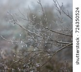Small photo of icy rain, icing of branches after icy rain, branches covered with ice crusts, unfavorable weather phenomenon - icy rain , icy hips of dogrose with berries, icicles on branches