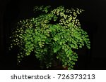 the beauty of the ferns   Shutterstock . vector #726373213