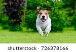 dog jumping straight forward at ... | Shutterstock . vector #726378166