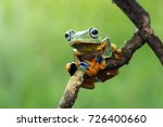 tree frog  flying frog on branch | Shutterstock . vector #726400660