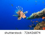 Colorful lionfish on a tropical ...