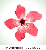 hibiscus flower vector...