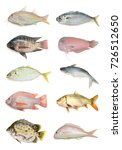 Small photo of collection of fish isolated on white background