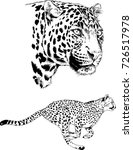 set of vector drawings on the... | Shutterstock .eps vector #726517978
