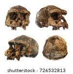 Small photo of Set of Homo erectus skull . Discovered in 1969 in Sangiran , Java , Indonesia . Dated to 1 million years ago . ( front . side . oblique . back view )
