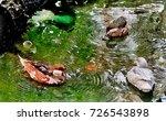 Beautiful Duck Birds In Pond...