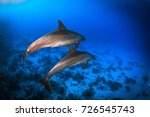 spine dolphins coming to play... | Shutterstock . vector #726545743