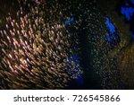 schooling glassfish. sea life... | Shutterstock . vector #726545866
