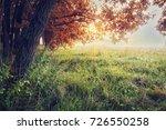 Autumn Nature. Autumn...