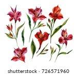 watercolor alstroemeria flowers ... | Shutterstock . vector #726571960