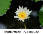 macro shot of a lotus flower .   Shutterstock . vector #726581020