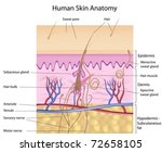 human skin cross section ... | Shutterstock .eps vector #72658105