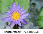 macro shot of a lotus flower .   Shutterstock . vector #726581068