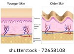 Old skin anatomy characterized by presence of age spots and wrinkles caused by loss of collagen fibers, atrophy of epidermis and blood vessels - stock vector