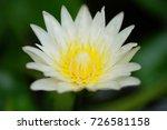 macro shot of a lotus flower .   Shutterstock . vector #726581158