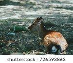 japan's famous nara deer. sika... | Shutterstock . vector #726593863