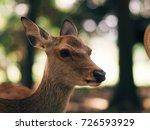 japan's famous nara deer. sika... | Shutterstock . vector #726593929
