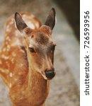 japan's famous nara deer. sika... | Shutterstock . vector #726593956