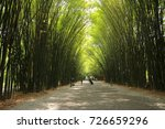 The Bamboo Is A Tunnel Along...