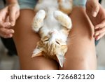 Stock photo cute little kitten sleeping on owner s knees 726682120