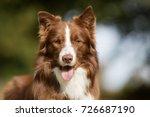 healthy purebred dog... | Shutterstock . vector #726687190