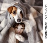 dog and cat under a plaid. pet... | Shutterstock . vector #726710044