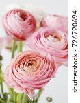 Small photo of Pink ranunculus flowers.