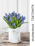 Blue Muscari Flowers  Grape...