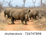 white rhinoceros in hlane royal ... | Shutterstock . vector #726747898