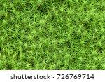 Green Wild Grass Look Like Sta...
