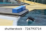 Small photo of sad orca grampus in a pool