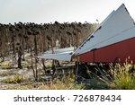 sunflower harvesting | Shutterstock . vector #726878434