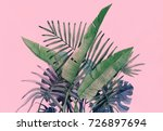 tropical plants. nature... | Shutterstock . vector #726897694