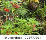 red blossoms growing wild   Shutterstock . vector #726977014