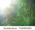 misty foggy jungle in twilight... | Shutterstock . vector #726981850