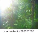 misty foggy jungle in twilight... | Shutterstock . vector #726981850