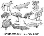 australian animal collection... | Shutterstock .eps vector #727021204