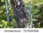 wire tree guard | Shutterstock . vector #727034506