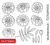 vector set with tagetes or... | Shutterstock .eps vector #727039453