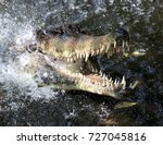 Small photo of The jaws of death