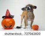 chihuahua with halloween pumpkin | Shutterstock . vector #727062820