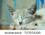 Stock photo  cropped shot of a cute sleeping kitten kitten cute kitten 727076200